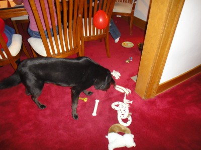 In the end, Mocha got a bunch of his toys that Ben had wrapped up.  All in all, a successful party!